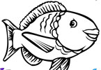 Big Fish de coloriage en ligne