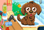 Cute puppy care 1