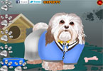 perro havanese vestir