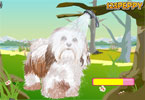 peppy \'s pet zorg - havanese hond